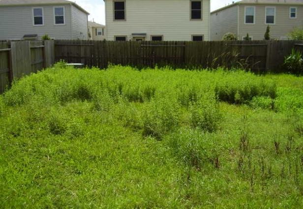 landscaping-daphne-alabama-640x441.jpg